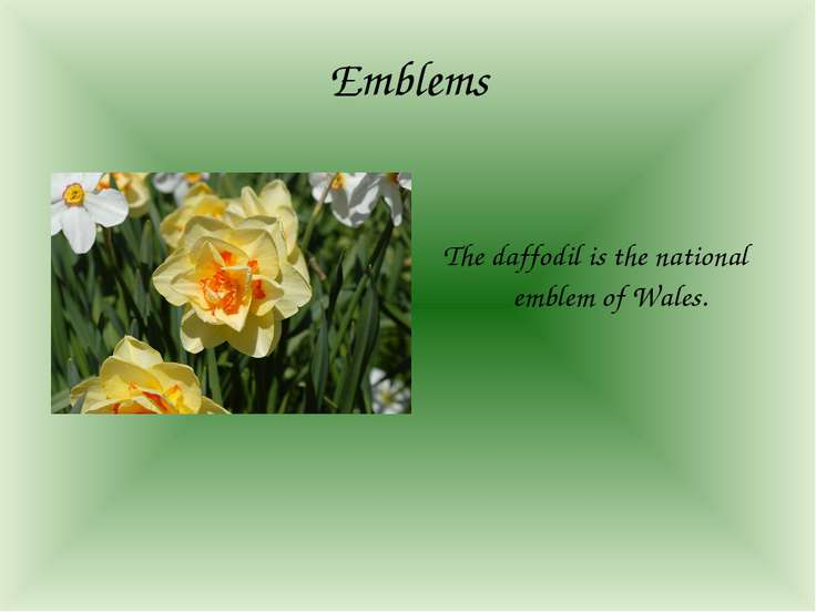 Emblems The daffodil is the national emblem of Wales.