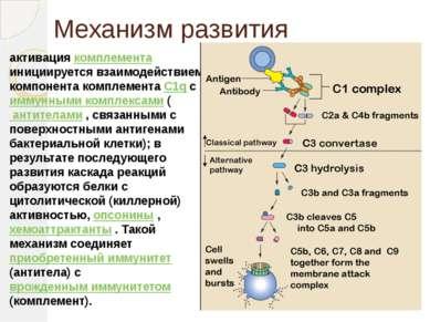 Механизм развития активация комплемента инициируется взаимодействием компонен...