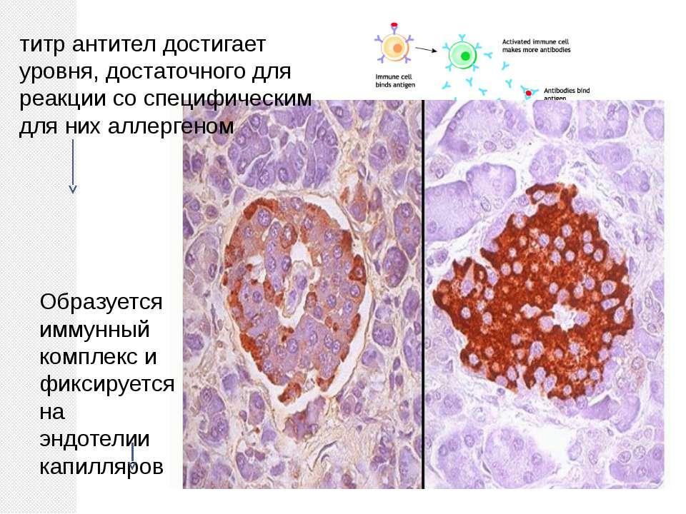 титр антител достигает уровня, достаточного для реакции со специфическим для ...