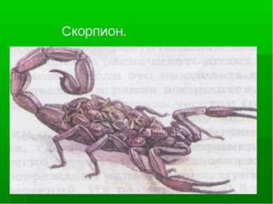 Скорпион.