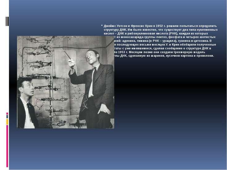 Джеймс Уотсон и Френсис Крик в 1952г. решили попытаться определить структуру...
