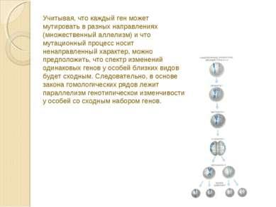 Учитывая, что каждый ген может мутировать в разных направлениях (множественны...