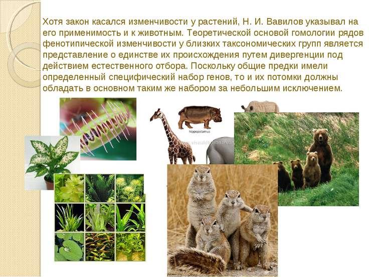 Хотя закон касался изменчивости у растений, Н. И. Вавилов указывал на его при...