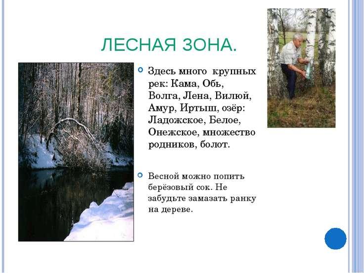 ЛЕСНАЯ ЗОНА. Здесь много крупных рек: Кама, Обь, Волга, Лена, Вилюй, Амур, Ир...