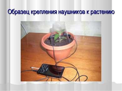 Образец крепления наушников к растению