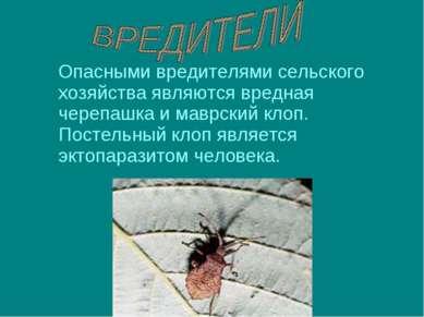 Опасными вредителями сельского хозяйства являются вредная черепашка и маврски...