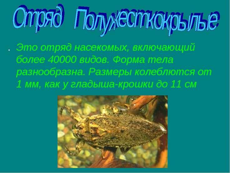 . Это отряд насекомых, включающий более 40000 видов. Форма тела разнообразна....
