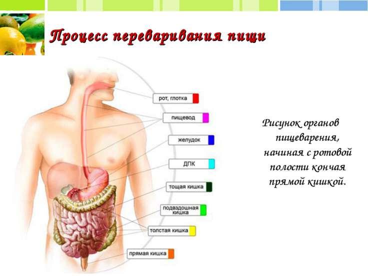 Процесс переваривания пищи Рисунок органов пищеварения, начиная с ротовой пол...