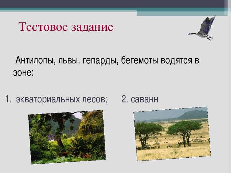 экваториальных лесов; 2. саванн Антилопы, львы, гепарды, бегемоты водятся в з...
