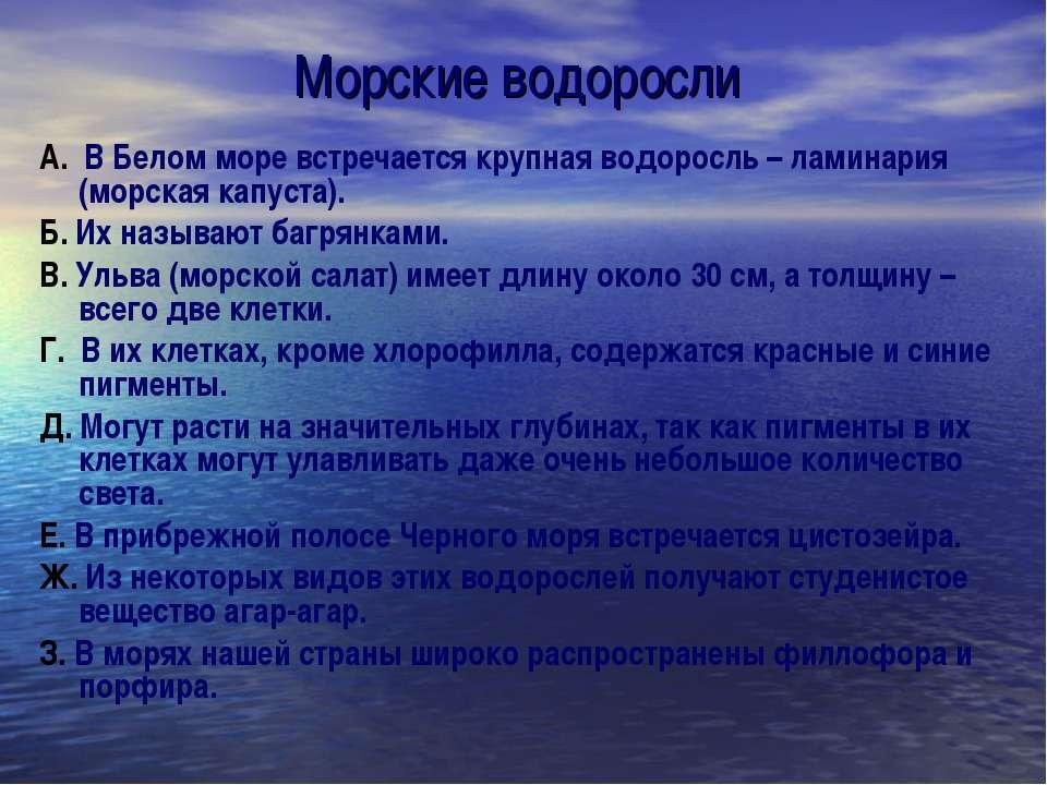 Морские водоросли А. В Белом море встречается крупная водоросль – ламинария (...