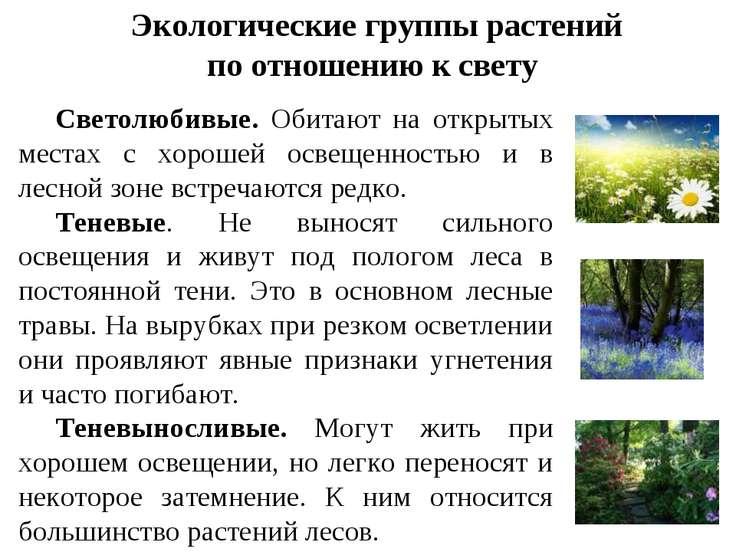 Экологические группы растений по отношению к свету Светолюбивые. Обитают на о...