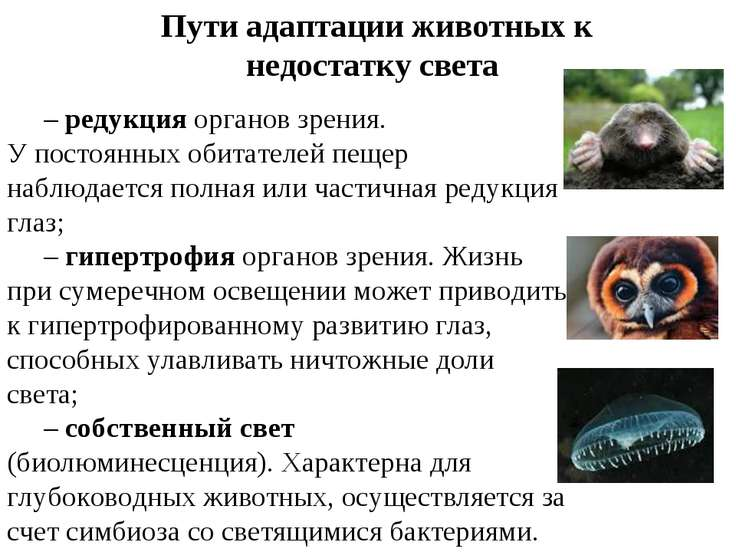 Пути адаптации животных к недостатку света –редукция органов зрения. У посто...
