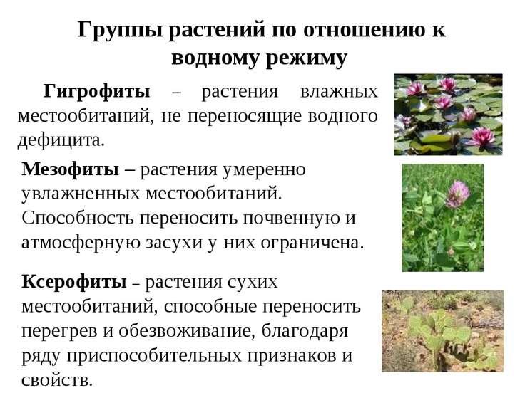 Группы растений по отношению к водному режиму Гигрофиты – растения влажных ме...