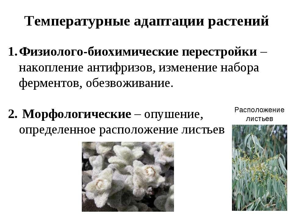 Температурные адаптации растений Физиолого-биохимические перестройки – накопл...