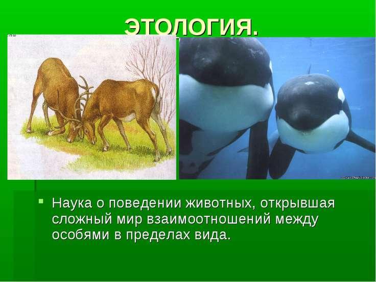 ЭТОЛОГИЯ. Наука о поведении животных, открывшая сложный мир взаимоотношений м...