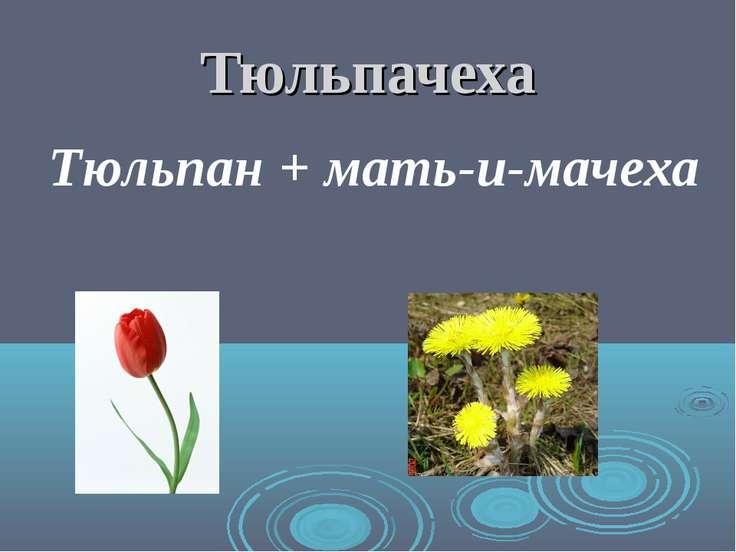 Тюльпачеха Тюльпан + мать-и-мачеха