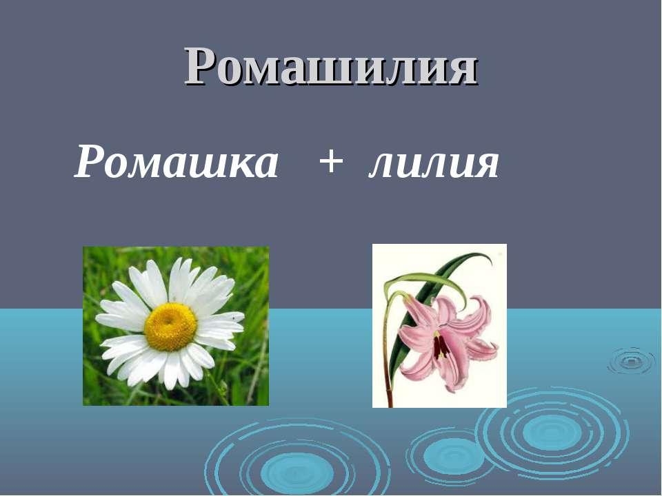 Ромашилия Ромашка + лилия