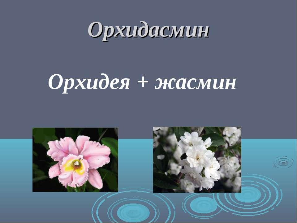 Орхидасмин Орхидея + жасмин