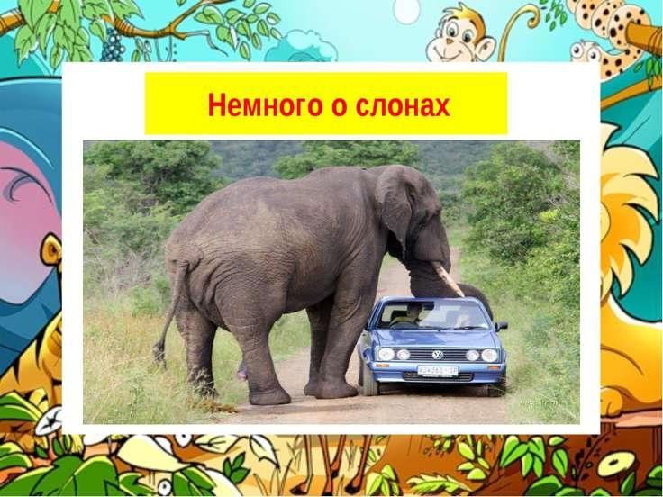 Слоны — самые большие из сухопутных животных. Несмотря на свою громадность, о...