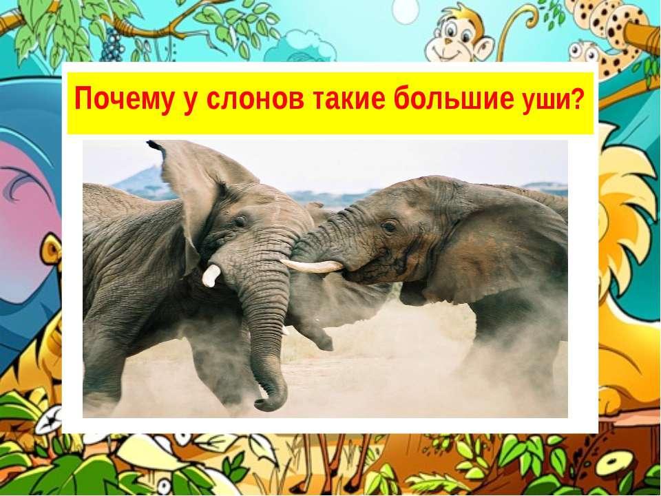 Уши помогают слону поддерживать постоянную температуру тела. Проходя через ни...