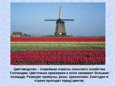 Цветоводство – старейшая отрасль сельского хозяйства Голландии. Цветочные ора...