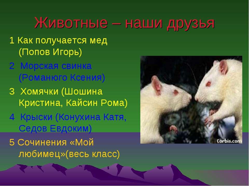 Животные – наши друзья 1 Как получается мед (Попов Игорь) 2 Морская свинка (Р...