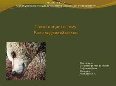 Презентация на тему: Все о медвежьей спячке. Подготовила: Студентка фВМиБ 11 ...