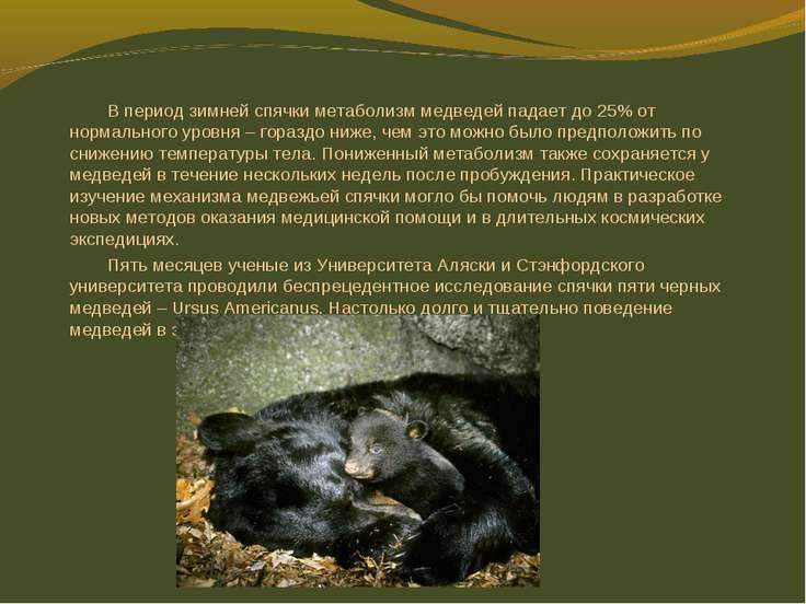 В период зимней спячки метаболизм медведей падает до 25% от нормального уровн...