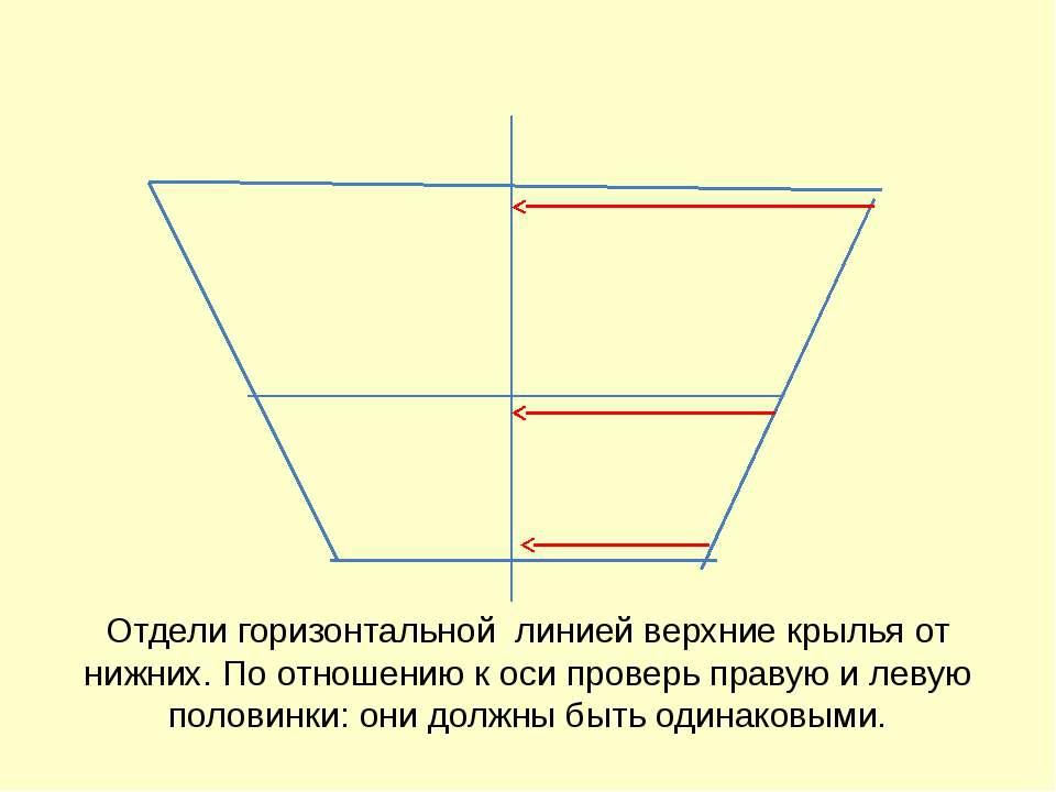 Отдели горизонтальной линией верхние крылья от нижних. По отношению к оси про...