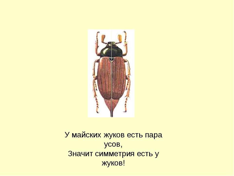 У майских жуков есть пара усов, Значит симметрия есть у жуков! Боголапова Нат...