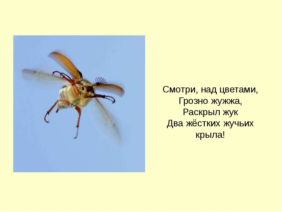 Смотри, над цветами, Грозно жужжа, Раскрыл жук Два жёстких жучьих крыла! Бого...