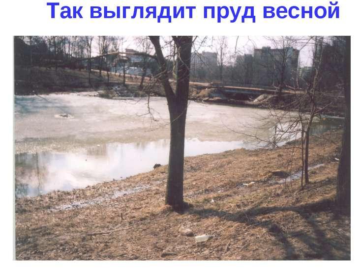 Так выглядит пруд весной