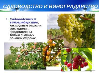 САДОВОДСТВО И ВИНОГРАДАРСТВО Садоводство и виноградарство, как крупные отрасл...