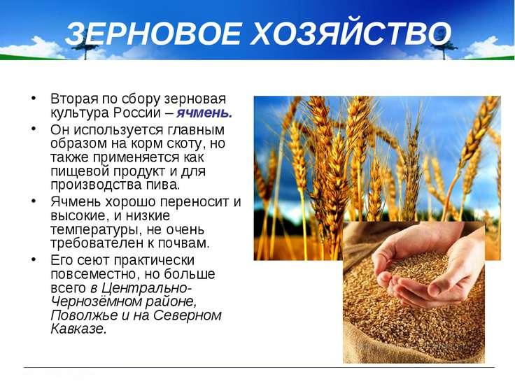 ЗЕРНОВОЕ ХОЗЯЙСТВО Вторая по сбору зерновая культура России – ячмень. Он испо...