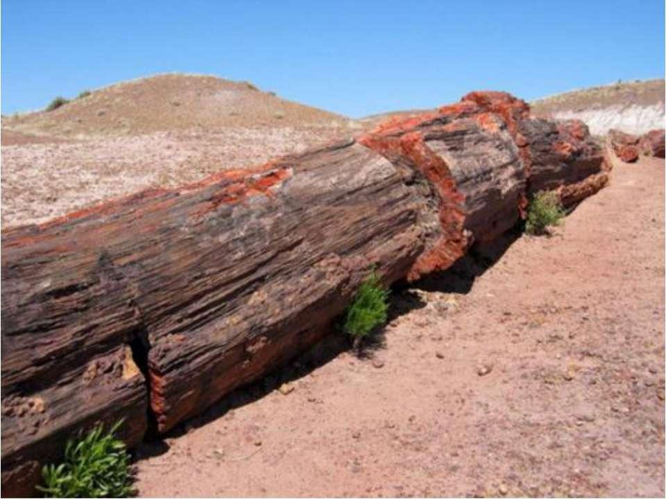 После того как схлынули воды океана, большинство деревьев оказались расколоты...
