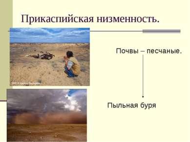 Прикаспийская низменность. Почвы – песчаные. Пыльная буря