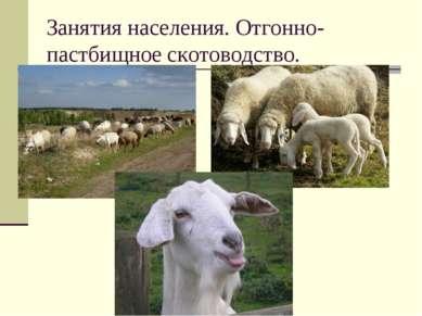 Занятия населения. Отгонно- пастбищное скотоводство.