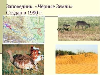 Заповедник. «Чёрные Земли» Создан в 1990 г. сайгак