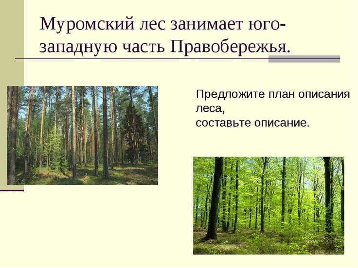 Муромский лес занимает юго-западную часть Правобережья. Предложите план описа...