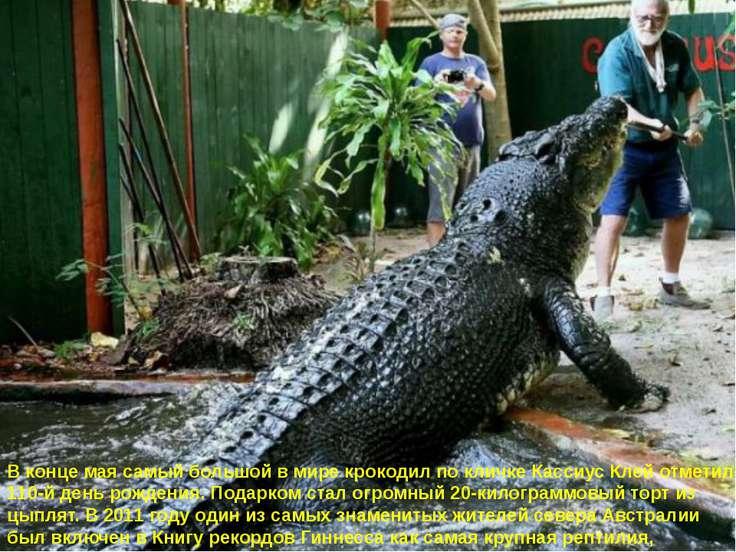 В конце мая самый большой в мире крокодил по кличке Кассиус Клей отметил 110-...