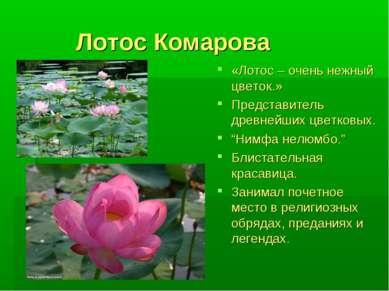 Лотос Комарова «Лотос – очень нежный цветок.» Представитель древнейших цветко...