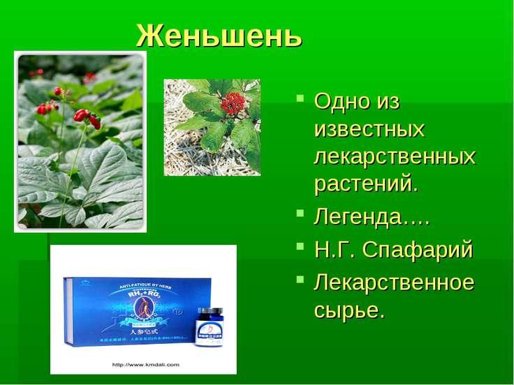Женьшень Одно из известных лекарственных растений. Легенда…. Н.Г. Спафарий Ле...