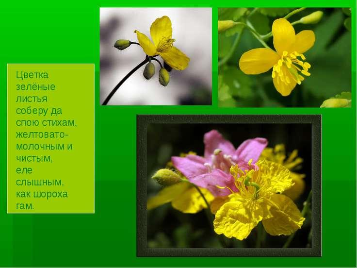 Цветка зелёные листья соберу да спою стихам, желтовато-молочным и чистым, еле...