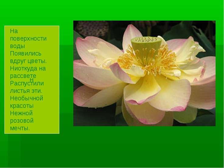 Н На поверхности воды Появились вдруг цветы. Ниоткуда на рассвете Распустили ...