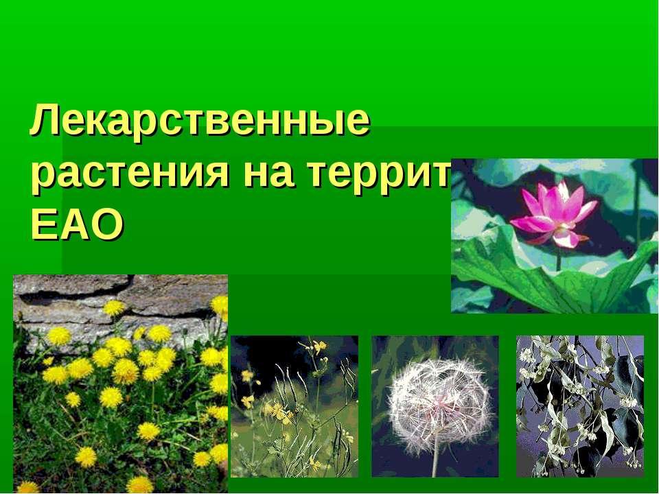 Лекарственные растения на территории ЕАО