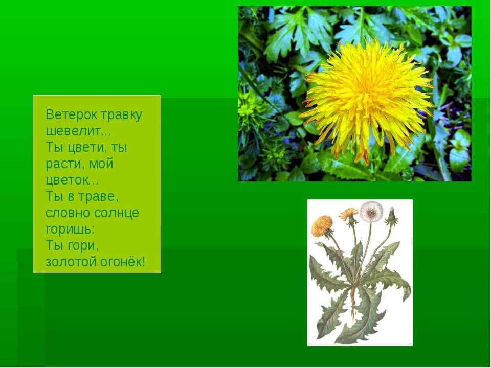 Ветерок травку шевелит... Ты цвети, ты расти, мой цветок... Ты в траве, словн...