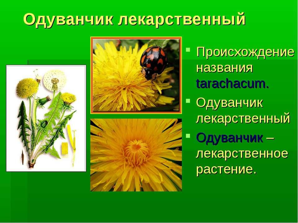Одуванчик лекарственный Происхождение названия tarachacum. Одуванчик лекарств...