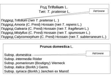 Род Trifolium L. Тип: T. pratense L. Подрод Trifolium (тип T. pratense L. ) П...
