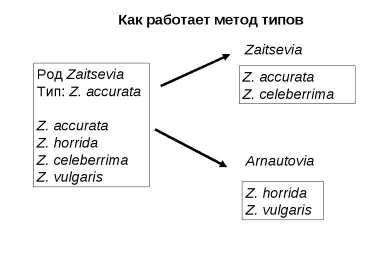 Как работает метод типов Род Zaitsevia Тип: Z. accurata Z. accurata Z. horrid...