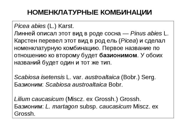 НОМЕНКЛАТУРНЫЕ КОМБИНАЦИИ Picea abies (L.) Karst. Линней описал этот вид в ро...
